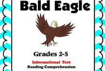 Bald Eagles / by Pam Christopherson