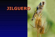 Extremadura y sus aves