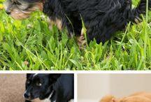 Dog and Puppy Training