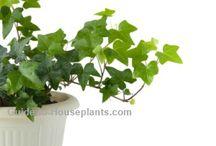 Indoor plants / by Monica Diaz