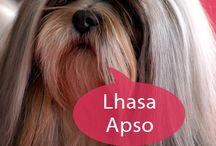 lhasa love