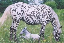 Odd snowflaking / Some of these horses have Birdcatcher Spots, some have... something else! :)