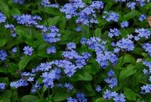 Garden - spring shade