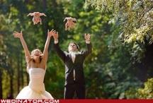 Chickens we like
