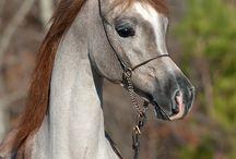 Horse / Pferde