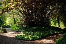 Levendige Tuin / Het is bijna ondenkbaar om ook maar een dag zonder een TUIN- gevoel om te krijgen. Met de slaapkamerdeuren open wordt ik 's ochtends rond 5 uur wakker van een indrukwekkend fluitconcert. Naar buiten kijkend zie ik dan prachtige bomen en struiken als achtergrond van de dakbeplanting, afstekend tegen de mooie wolkenluchten. In alle vroegte kan ik het niet laten een TUIN- wandeling te maken door ons eigen paradijs!  Deze tuin is aangelegd door: Smeets Hoveniersbedrijf v.o.f.