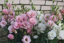 интересные цветы для клумбы