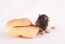rat killer / by Betty Reedy