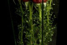 herbs kwiaty