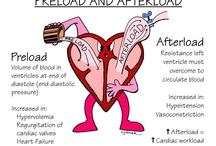 Preload/Afterload