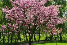 Träd blommor och buskar