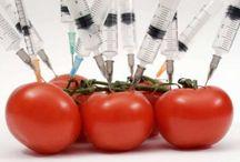 Agricoltura / News su agricoltura sostenibile, nuove forme di coltivazione sostenibile