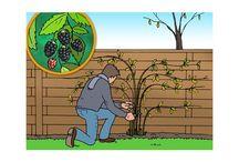 Kleinfruit in de tuin