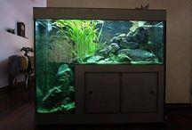 Amazing Fish Tanks