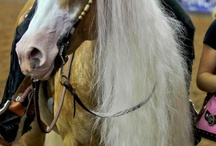 horses>everything else / by Alexis Cook