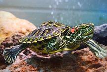 All Turtles
