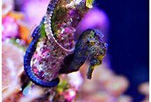 Under da sea / by Carolyn Liaromatis-Hinckley