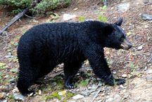 Savci-Psotvární (psovití a medvědovití) šelmy