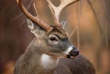 Hunting*Fishing*Camping / by Beaver Creek