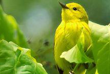 groen met geel