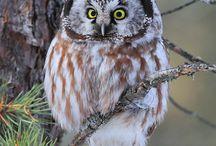 owls.......hawks......eagles / by Karen Mendenhall