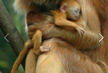 Iubind animalele pretuiti viata!