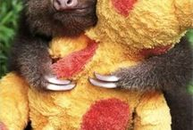 ANIMALS...Sloths... / by Judy O