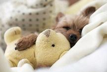 Own que bonitinho / Fotos de animais bonitinhos que encontro pela web