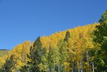 Aspens in New Mexico / The meditative beauty of walking through the Aspens during autumn in New Mexico...