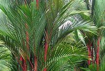 tropical Plants path