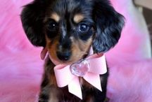 Cuties / O.M.G you will die of cuteness when you see these  / by Bentley LOVES Animals
