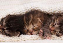 Kitten Season