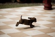 All Things Cute as puppies. / Dogs of all kinds