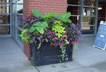 planten bloembakken