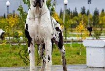 doglove <3
