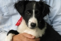 Adoptable Dogs / by Megan Kalany