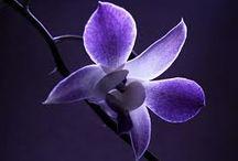 I like purple / by Mary