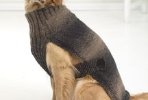Big dogs with  sweaters