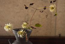 Ikebana / by jy Shim