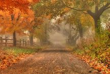 The Long road / the road to wealth, health, prosperity is often paved with silence and loneliness.