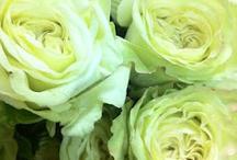 Flowers For Erin