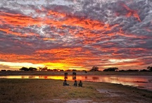 Hwange, Zimbabwe / Read more on the region our website - http://www.zambezitraveller.com/destination/hwange/profile