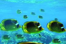 Hurghada / Skøn ferieby med skønne strandpromenader og flotte indbydende sandstrande.