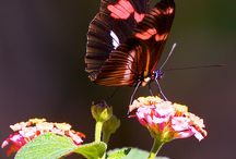 Butterfly / Butterfly