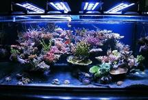 Aquarium Saltwater