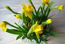 Kukkia/My flowers
