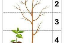 starame sa o rastlinky