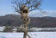 Terrific Treehouses