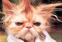 Bad Hair Days / We all know the days when we climb out of bed and something just doesn't feel or look right...