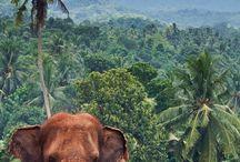 Elephantine